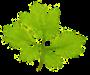 Bioenergetic-Institut Prinz